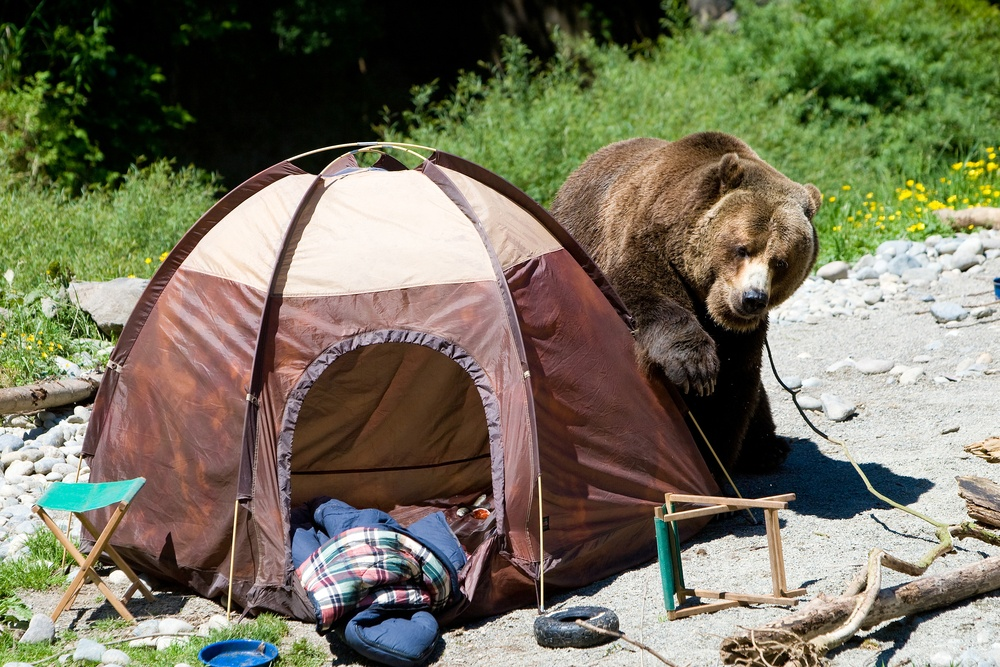 8 Great Tips for Animal Safety While Camping